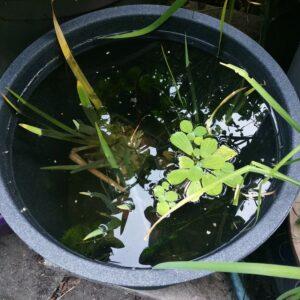 Aquaristik im Garten