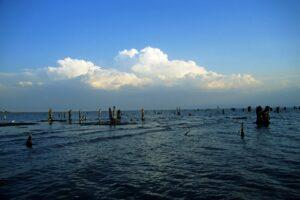 Die Nicht-Cichliden des Malawisees und angrenzender Gewässer
