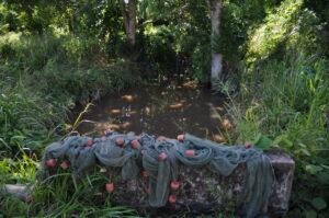 Biotop des Kropfsalmlers - Fangnetz