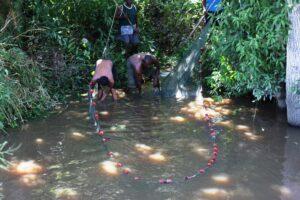 Das Fangnetz