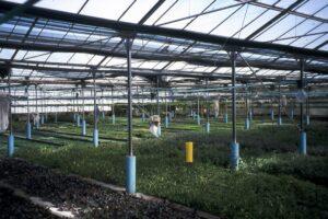 Herkunft Aquarienpflanzen