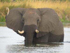 Botsuana 2016-Okavango-Namibia/Zimbabwe